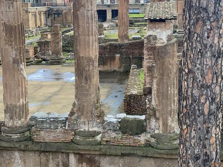 猫と遺跡を愛でる場所。ローマ、トッレ・アルジェンティーナ広場|イタリア観光ガイド