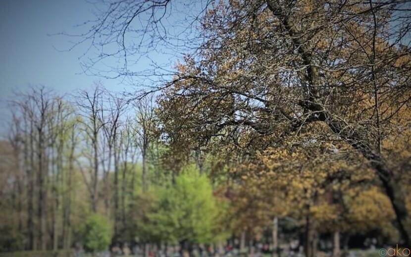 イベントも盛りだくさん!ミラノ、インドロ・モンタネッリ公共庭園|イタリア観光ガイド